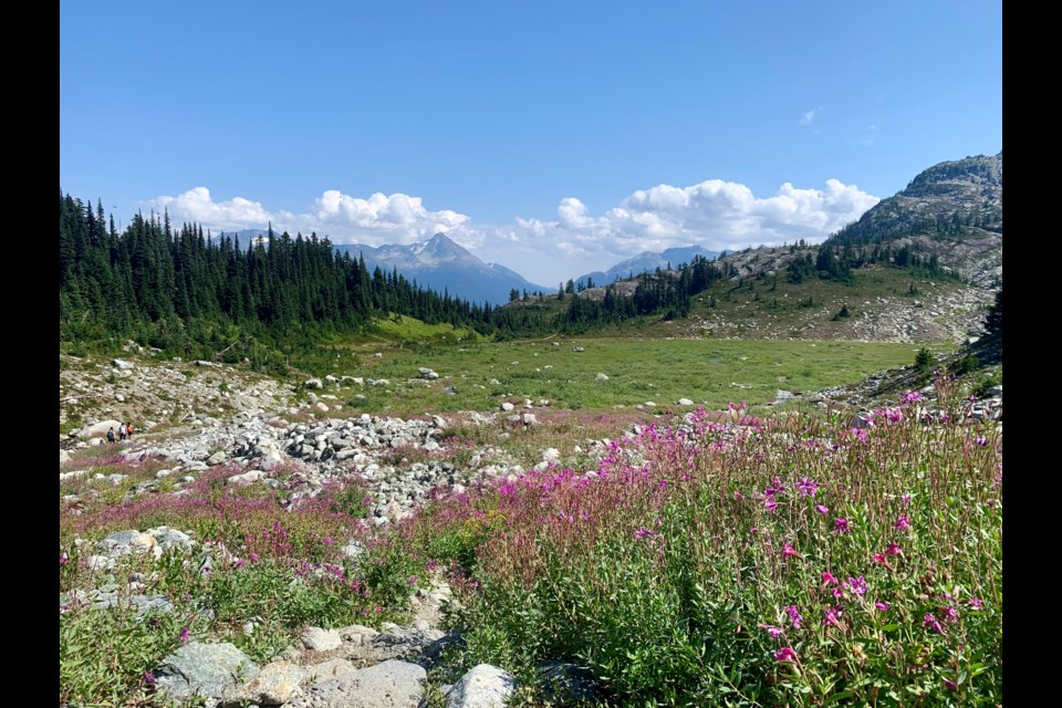 Wildflower season is slowing down in the alpine, but a few bright patches can still be found, as seen near Rainbow Glacier on Saturday, Aug. 21.