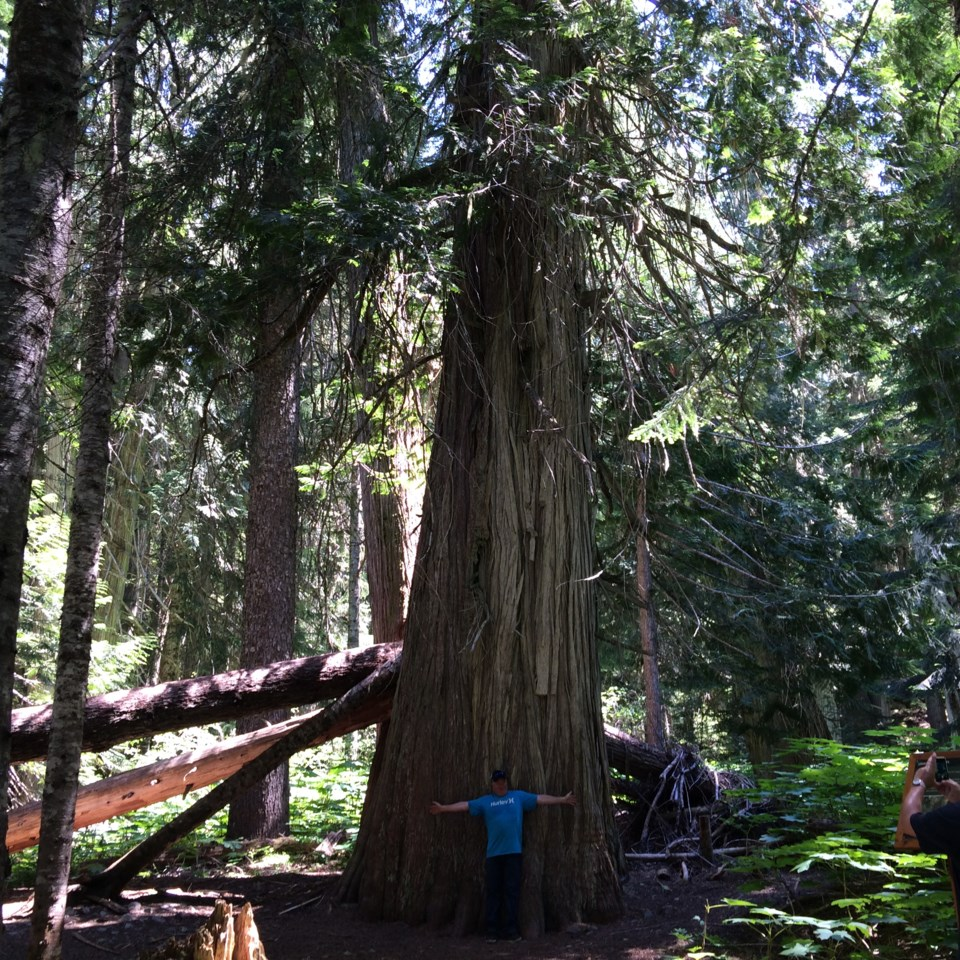 a old growth letter CO