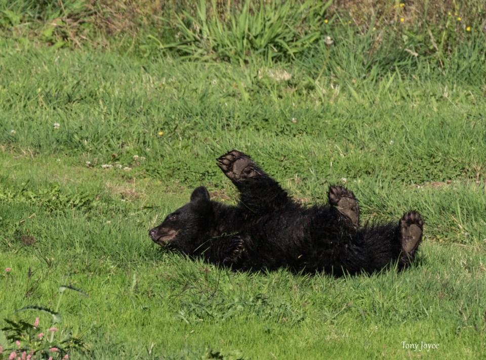 Bear facts June 30