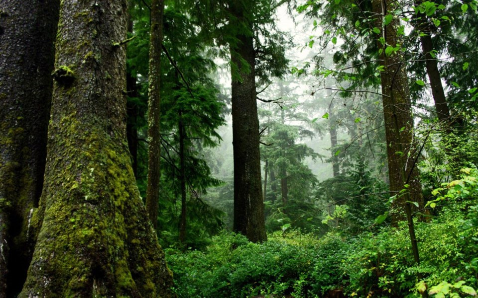 old-growth-forest-oregon-1536x940
