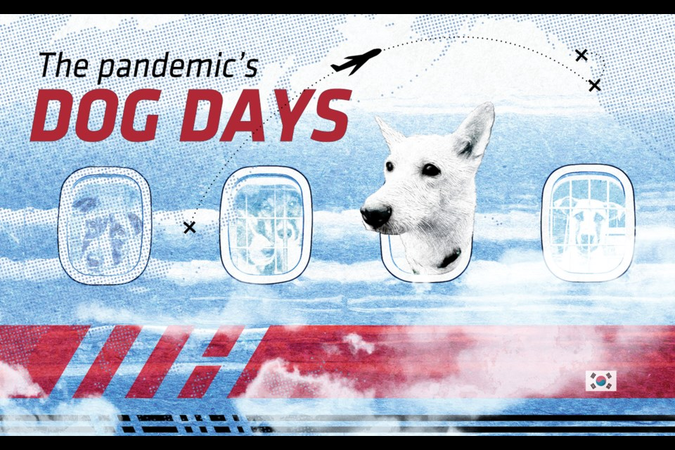 The pandemic's dog days