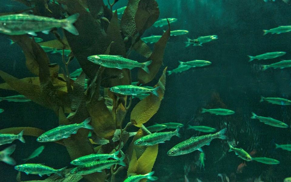 feature_salmonfishing-070821-3