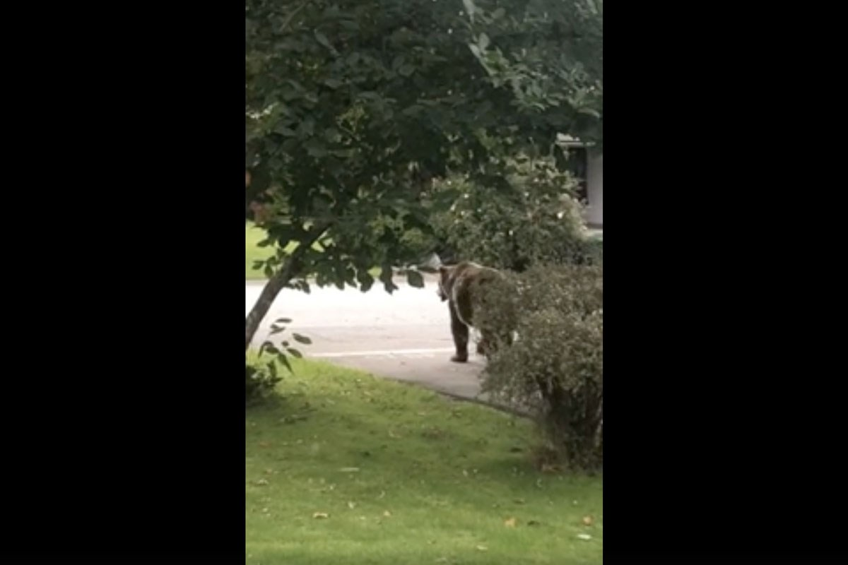 VIDEO: Grizzly in Squamish
