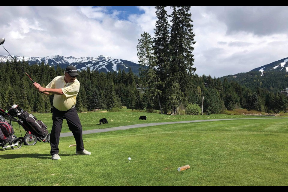 GOLFING BEARS A pair of black bears observe John Benbow's swing during a Mother's Day golf game at the Whistler Golf Course.