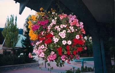 hanging_flowers