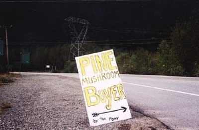 mushroom_buyer
