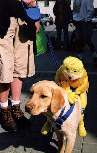 doggy_walk
