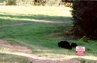 bearsfeeding