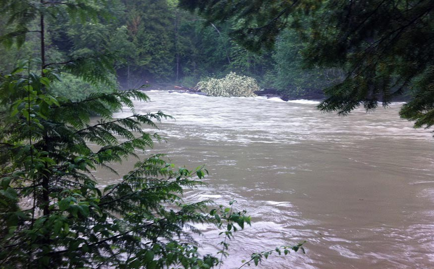 The Birkenhead River, May 13. Photo by Veronica Woodruff/EcoFish Research
