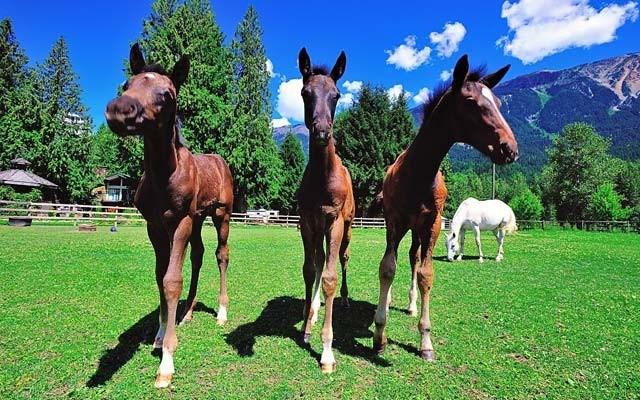 August 2013 Foal Crop American Meadow