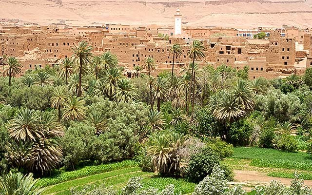 An oasis and town in desert-like eastern Morocco. Photo by Alison Appelbe