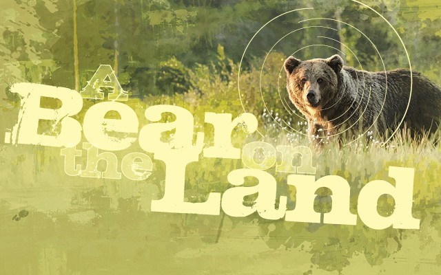 A bear on the land - Some 30 years after it began, radio-collaring continues to teach us much about grizzly bears in Canada's national parks—and beyond. Story by Leslie Anthony