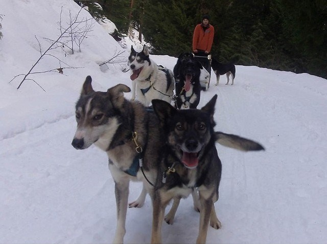 n-sled_dogs_web_2349_john_french_