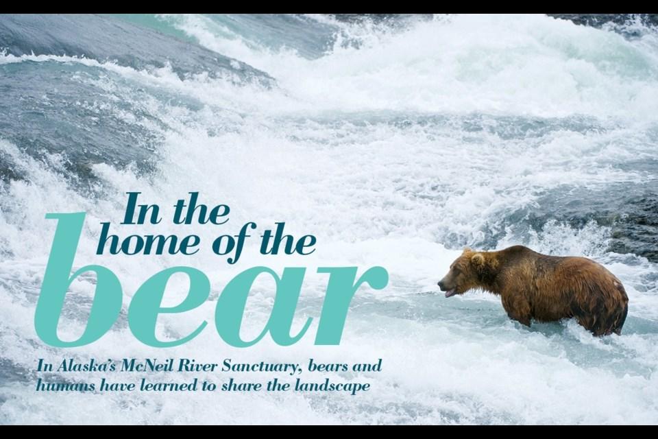 "American Brown bear/Grizzly bear (Ursus arctos horribilis), McNeil River Sanctuary, Alaska. <a href=""http://shutterstock.com"">shutterstock.com</a>"
