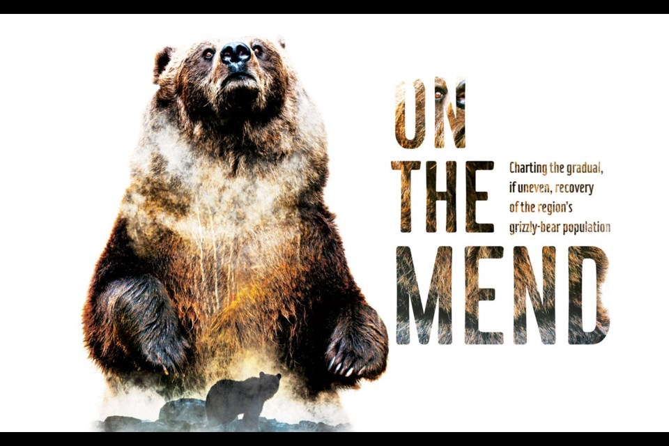 ON THE MEND Charting the recovery of the region's grizzly-bear population. PHOTO ILLUSTRATION BY CLAIRE RYAN