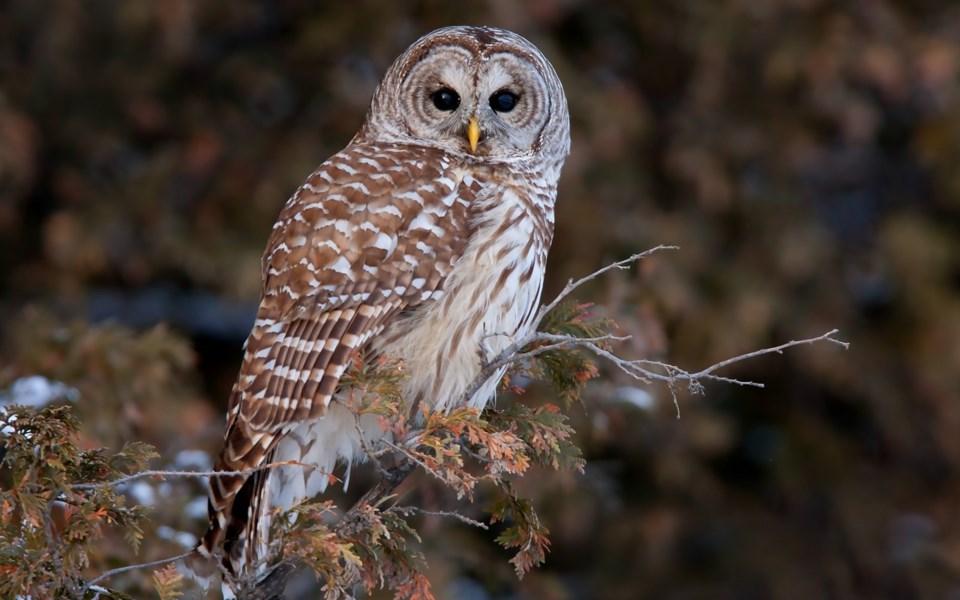 n-owl-attack-brief-26
