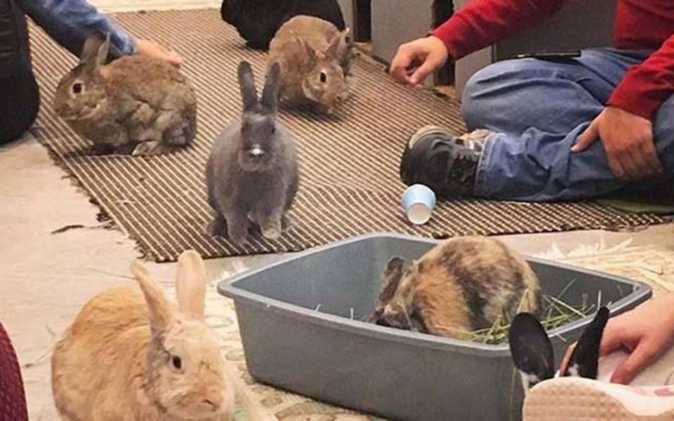 14170046_bunny-cafe-min1