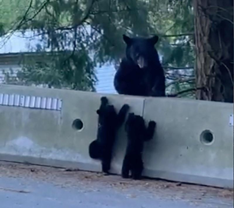 2630_bear_cubs