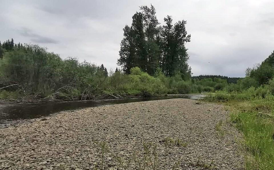 Endako River Spruce  City Wildlife Association