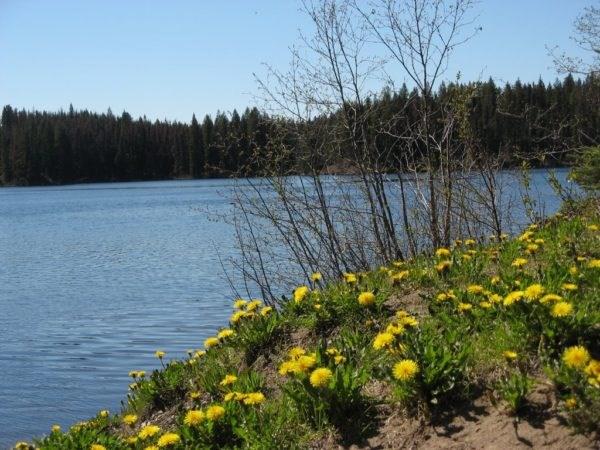 Berman Lake - Prince George
