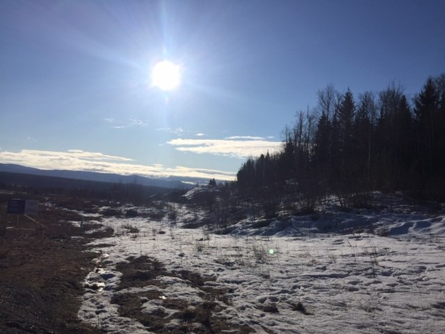 Rosmarie Vonah - April 8, 2021 sun snow trees spring