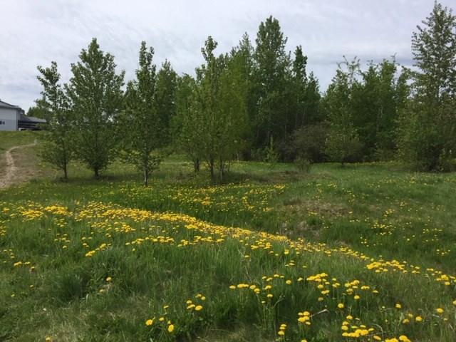 Rosmarie Vonah - May 29, 2020 dandelions