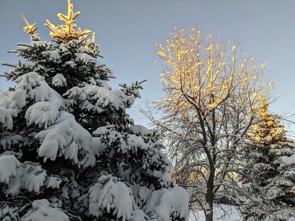 Helen Tabora - Nov. 28, 2020 snow trees bright sky