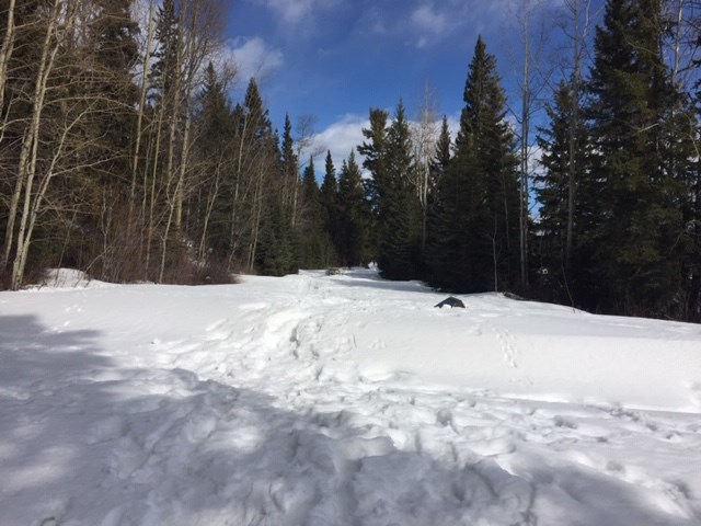 West Lake Provincial Park near Prince George. (via Rosmarie Vonah)