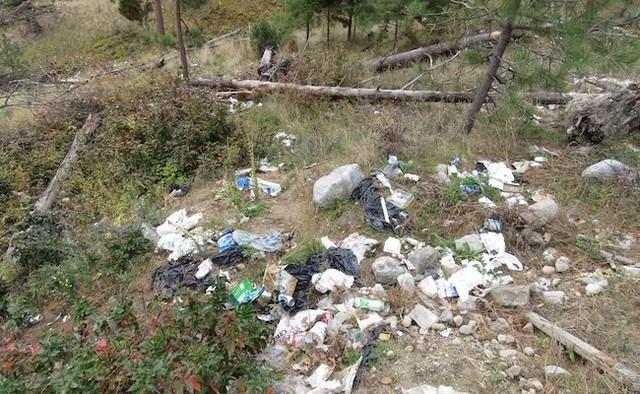 BCCOS garbage Lake Okanagan bears