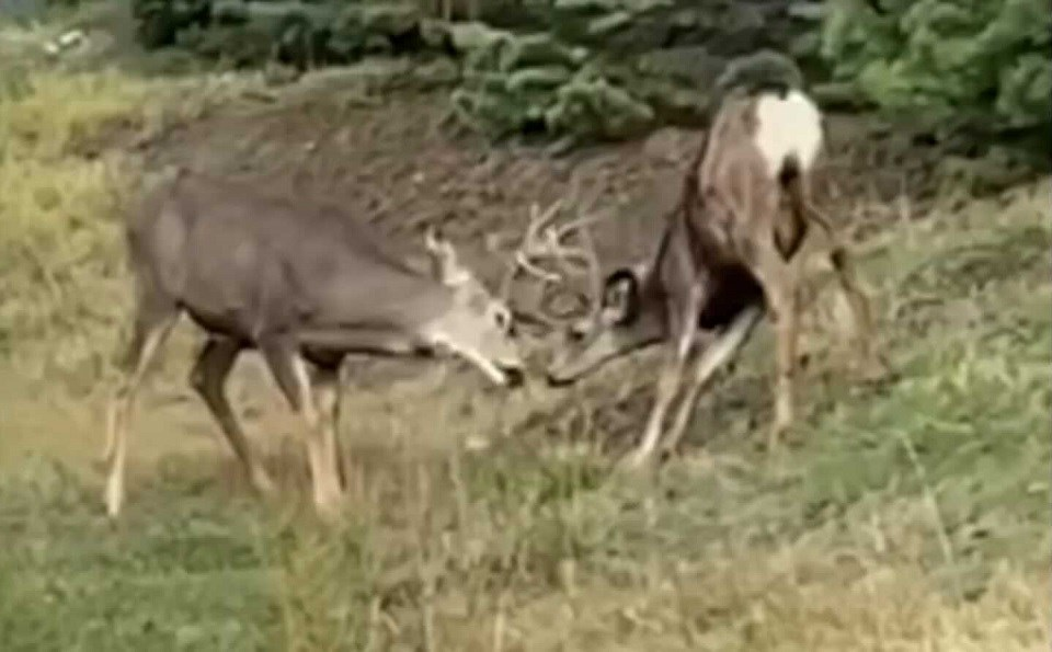 Bucks butting heads Kelowna