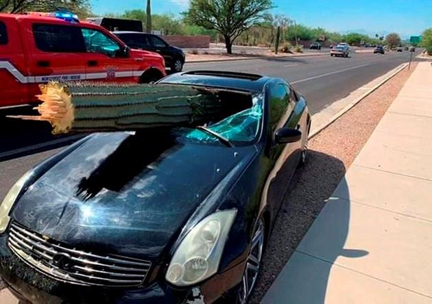 Cactus in car
