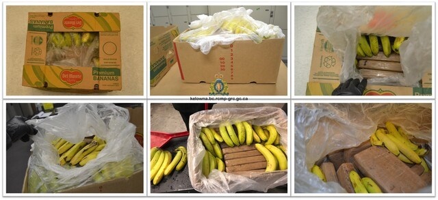 cocaine-in-bananas