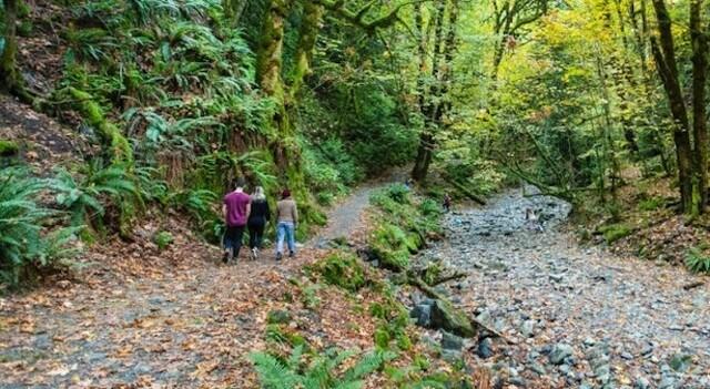 goldstream trail