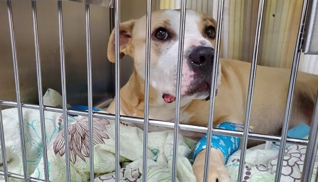 Rocky the homeless veteran's dog