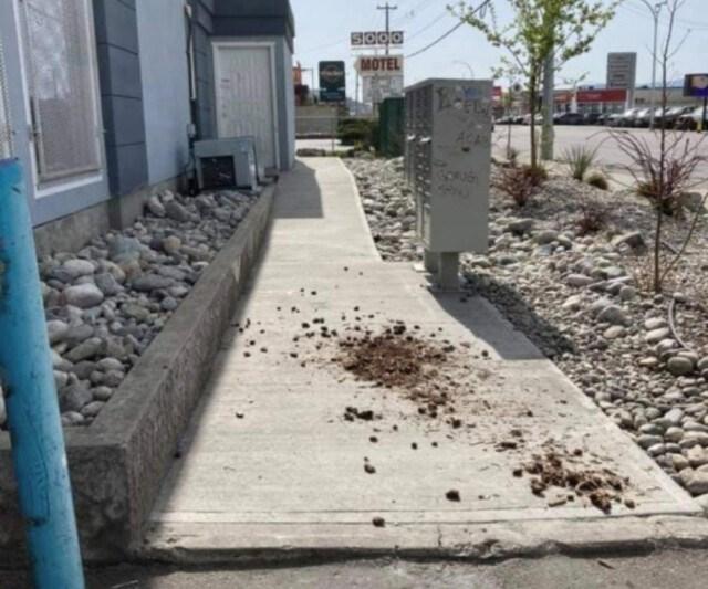 sidewalk-poo