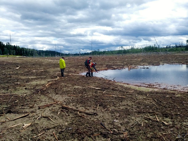 Searching the wetland for aquatic invertebrates at a Wetlandkeepers workshop hosted for McLeod Lake Indian Band in 2019