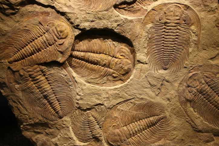 BEYOND LOCAL: A new fossil discovery may add hundreds of millions of years to the history of animals