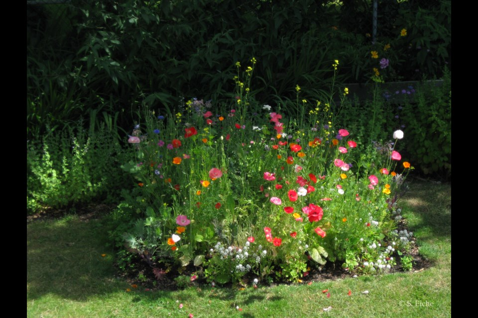 Don't mow your lawn right to the edge, but turn the perimeter of your lawn into a zone of plants and wildflowers.