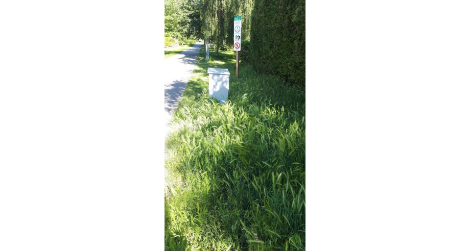 10foxtailgrass2(web)