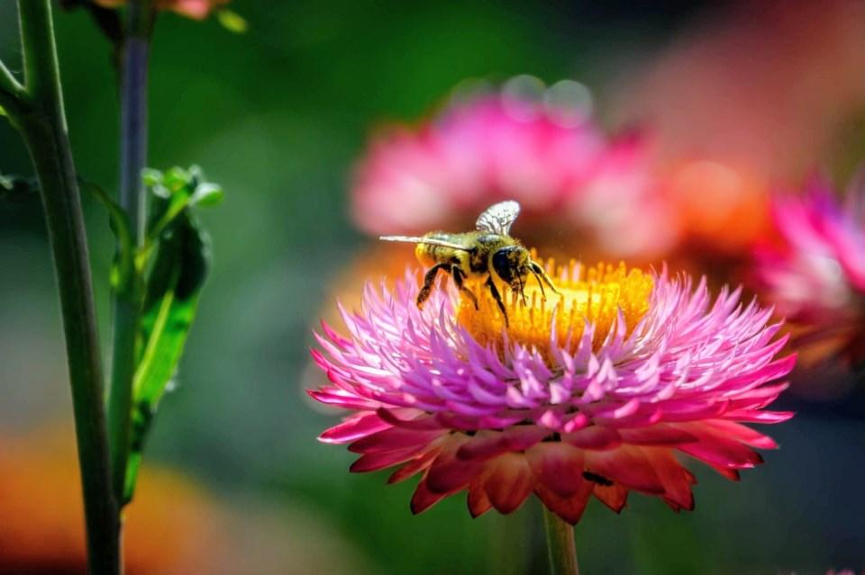 05beeonflower