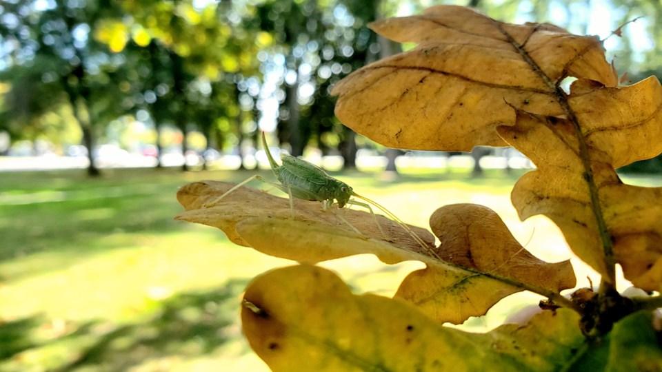 14grasshopper