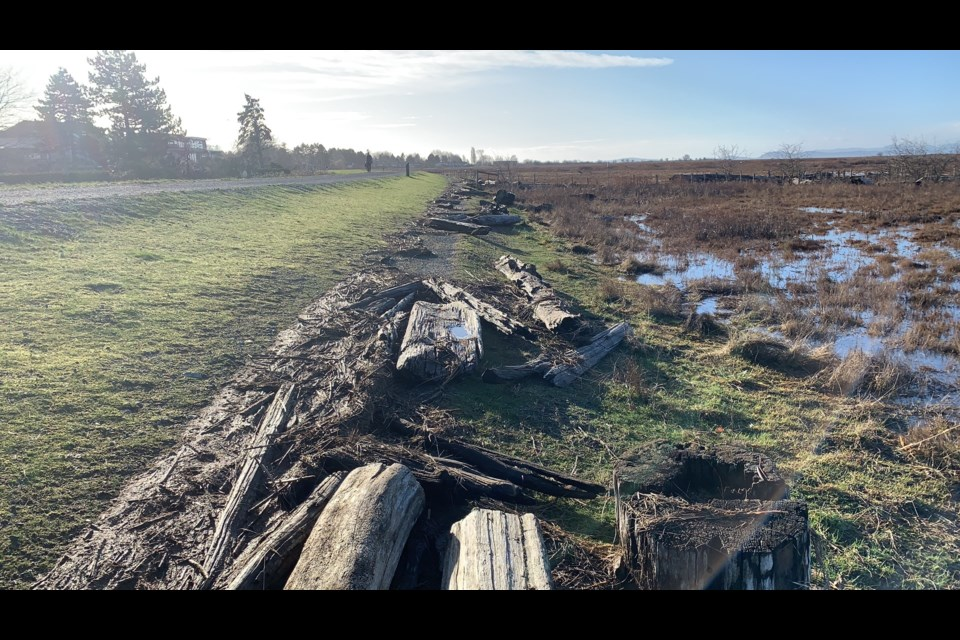 It appears logs may have been blown from the marsh onto the West Dyke Trail during the wind storm Tuesday night.