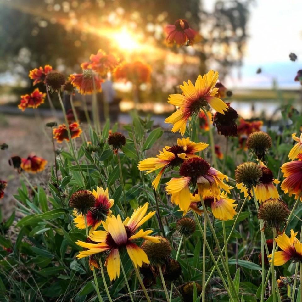 16flowers