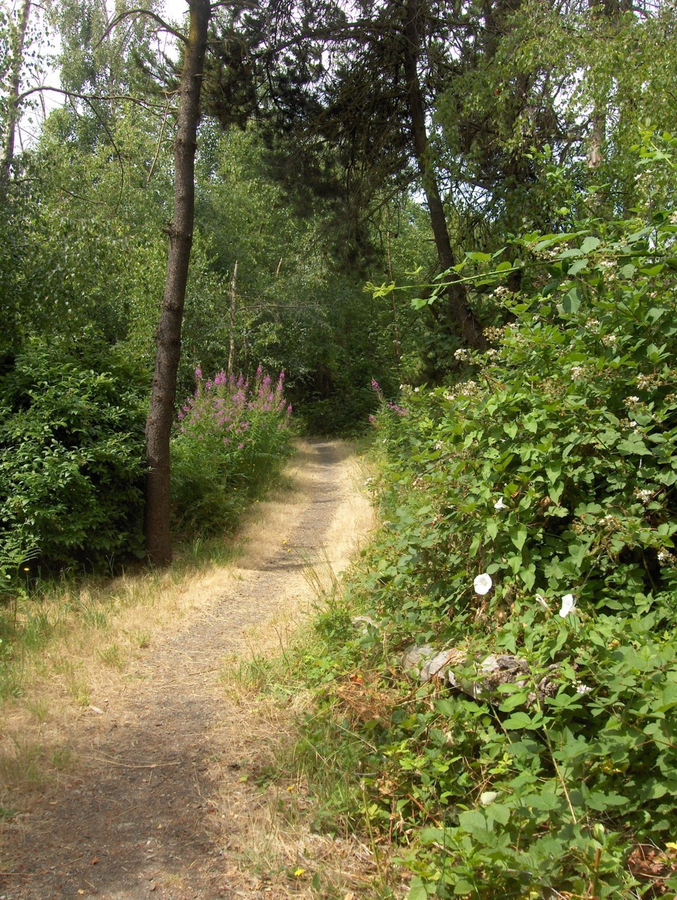 Trail in Odlinwood