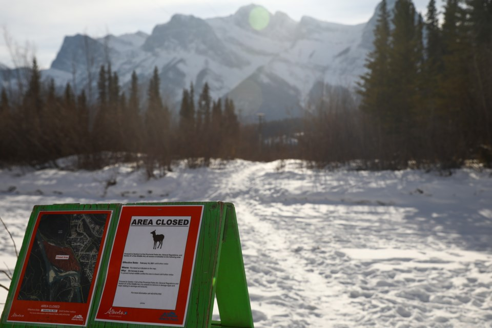 A sign notifies walkers about the area closure for an unnamed island near Canmore after the carcass of an elk was left in the area for wildlife to feed on. The closure was in effect from Tuesday (Feb. 16) until Monday (Feb. 22). EVAN BUHLER RMO PHOTO