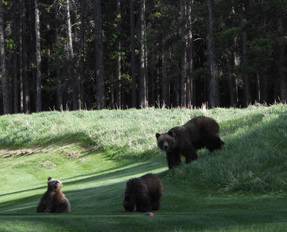 20210604 Bears