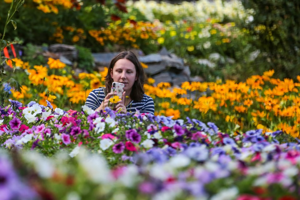 Amanda Buchko takes a picture of the flowers with her phone camera, in the Cascade of time Garden in Banff in on Saturday (Aug. 28). EVAN BUHLER RMO PHOTO