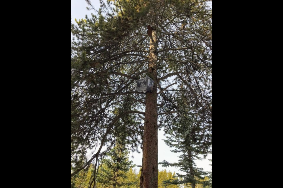 The makeshift nest put together by Parks Canada staff over the Easter long weekend for an owl egg found in an ashtray. LAKE LOUISE FIRE DEPARTMENT