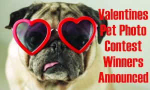 Show Your Fur-Ever Love Pet Photo Contest