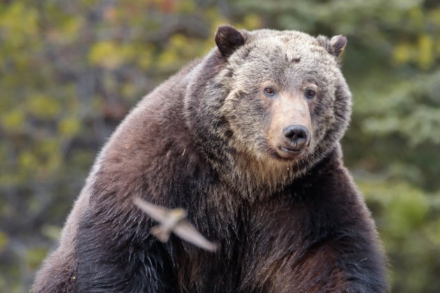 grizzly136_9785craigdouce